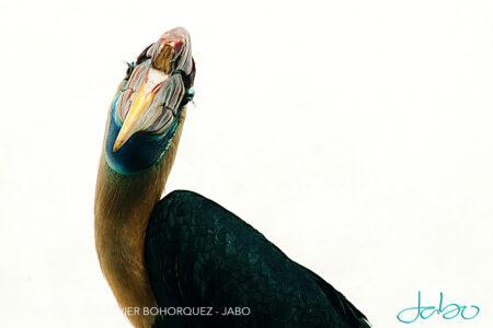 Bird Bronx Zoo