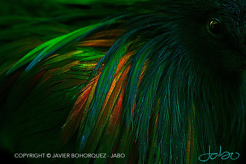 Green Bird Bronx Zoo